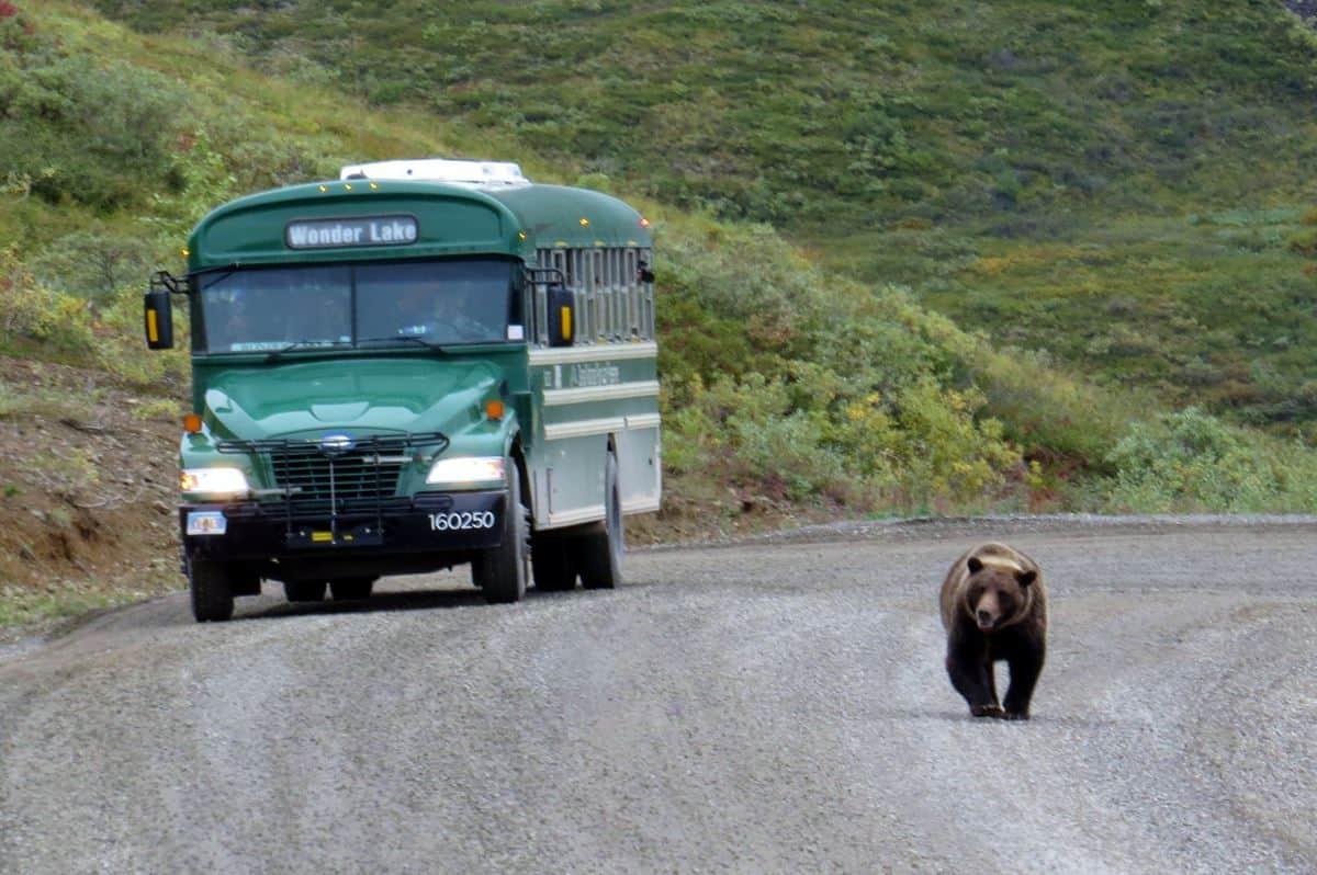 Visiting Denali National Park – Trip Report & Tips
