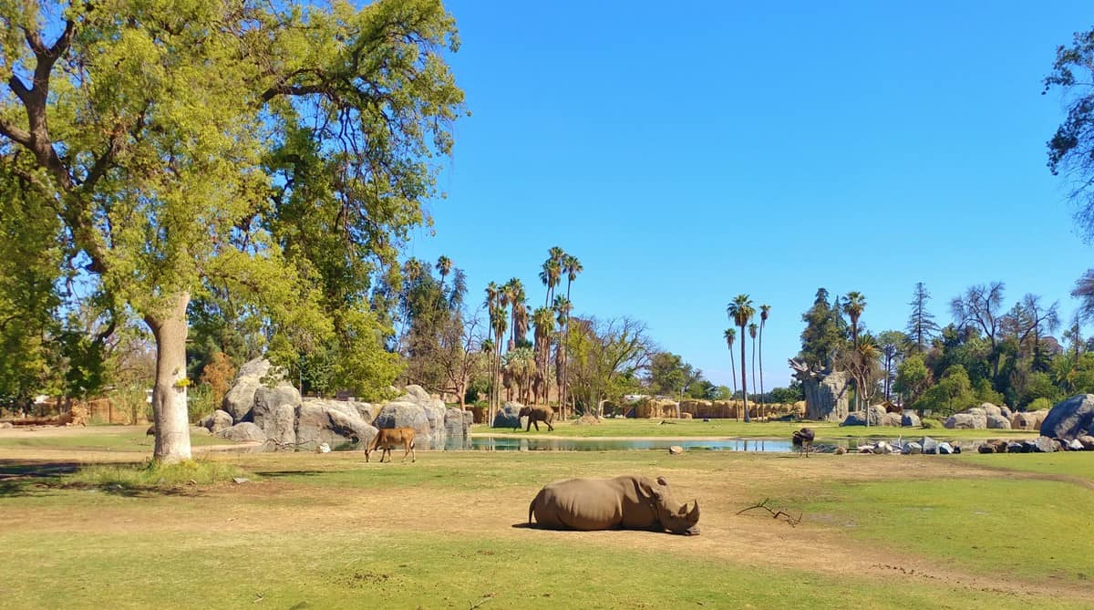 11 Fantastic Reasons to Visit the Fresno Chaffee Zoo