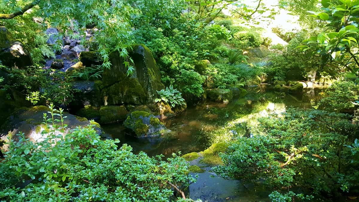 19 Beautiful Moments I Captured in the Portland Japanese Garden