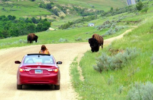 37 Tips That Will Make Your Road Trip a Success