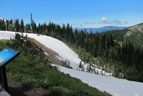 Hurricane Ridge in Olympic National Forest
